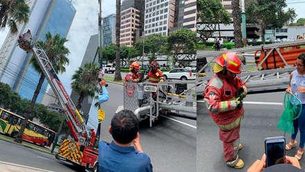 Bomberos rescataron con escalera telescópica a un gato subido a una palmera en San Isidro