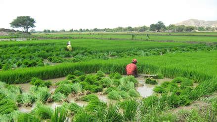 Gobierno evalúa subsidios y créditos para agricultores afectados por huaicos