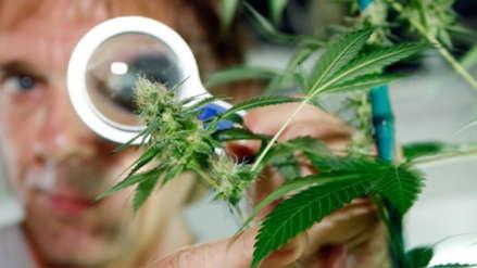 Minsa: La entrega de cannabis medicinal será solo con receta médica
