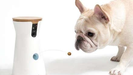 ¿Tu perro se ejercita lo suficiente? ¿Quién cambiará la arena del gato? La tecnología móvil llega a las mascotas