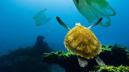 ¡Los océanos nos necesitan! Aprende sobre las 3R del consumo responsable