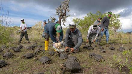 Fotos | Liberan 155 tortugas gigantes  de un programa de reproducción en Galápagos
