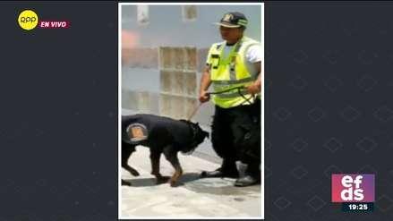 Municipalidad de Chorrillos despidió a sereno que maltrató a un perro en playa Agua Dulce