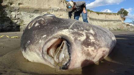 Las fotos del hallazgo de una extraña criatura marina que desconcertó a científicos de Estados Unidos
