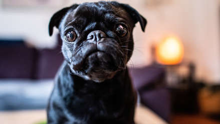 Una ciudad confiscó  y vendió a una perra para saldar la deuda de una familia