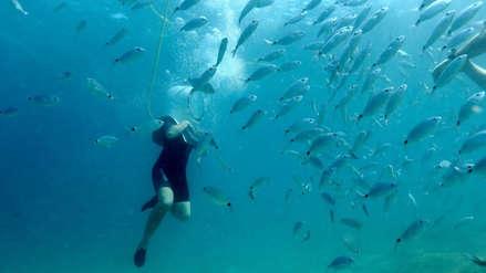 Las canículas marinas: la invisible amenaza en los océanos que se vuelve cada vez más destructiva