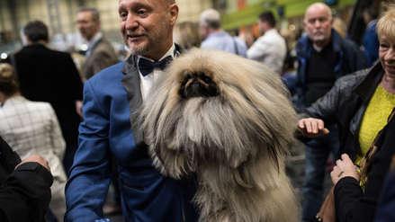 Las 30 postales del concurso de exhibición canina más importante del mundo