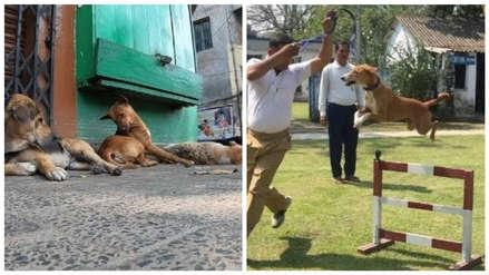 La historia de Asha: El perro callejero que se convirtió en el líder del escuadrón antibombas de la India