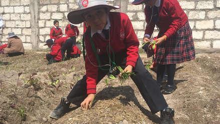 Con labores de siembra aprenderán Ciencia y Tecnología en colegio de Arequipa