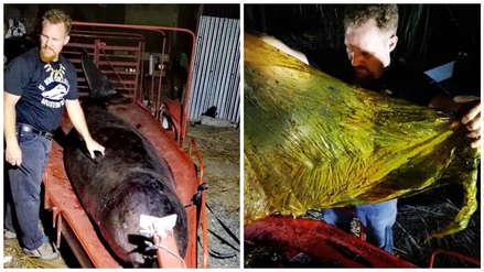 Ballena hallada muerta en Filipinas llevaba 40 kilos de plástico en el estómago
