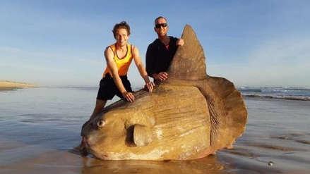 Un pez luna gigante fue hallado en una playa de Australia