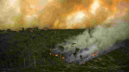 Presentan herramienta que permite monitorear uso del suelo y deforestación de la Amazonía