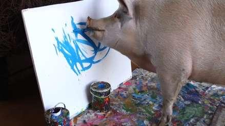 Ella es 'Pigcasso' la cerdita pintora que sorprendió a Sudáfrica y al mundo