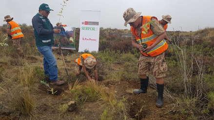 Arequipa | Plantarán 1500 árboles de Queñual que ayudan a la formación de manantiales