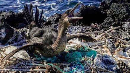 Un monstruo de plástico amenaza la vida en el paraíso de Galápagos [Fotos]
