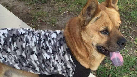 Trujillo: Toda una urbanización busca a Hachy, el perro guardían del barrio