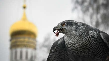 Conoce a la escuadrilla de gavilanes que resguarda el Kremlin, el palacio presidencial de Rusia [FOTOS]