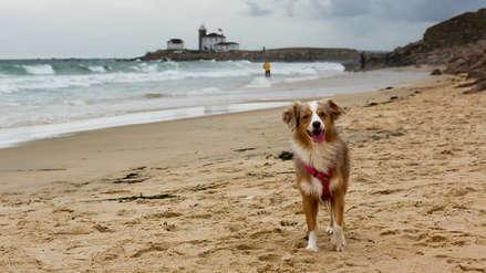 Semana Santa: Sigue estos 10 consejos para viajar con tu perro y disfrutar el camino