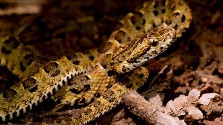 Nueva especie de serpiente endémica y otros hallazgos en Bahuaja Sonene
