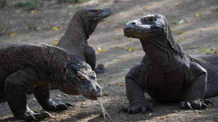 La Isla Komodo será cerrada porque la gente está robándose a los dragones