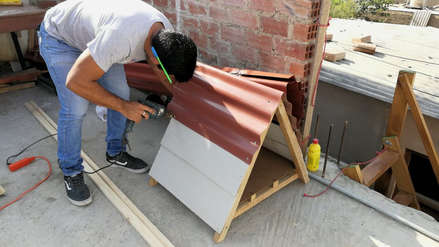 Conozca al joven universitario que construye casitas para perros abandonados en Chiclayo