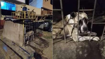 Un perro es encerrado en jaula en la calle: sus dueños dicen que