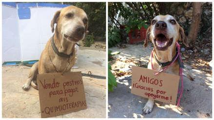 Conoce a Deko: El perro que vendió postres para pagar su quimioterapia