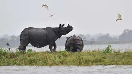 Arrestan a dos contrabandistas sudafricanos con 167 cuernos de rinoceronte