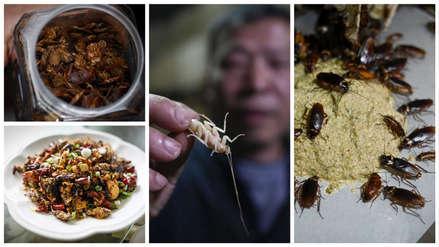 ¿Crujientes o picantes?: Las cucarachas salteadas, el insólito plato que se come en China [FOTOS]
