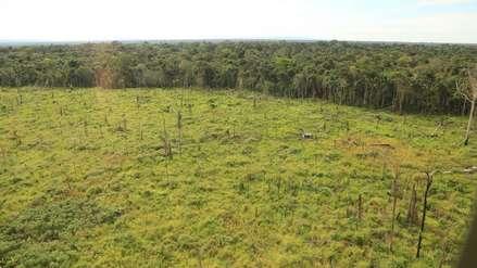 Día de La Tierra: deforestación hace que Latinoamérica sea más vulnerable al cambio climático