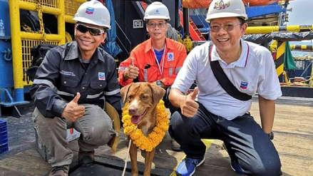 Boonrod: conoce la historia del perro que fue rescatado en alta mar en Tailandia