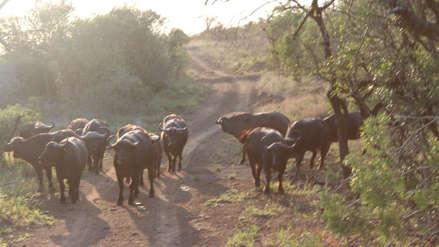Con ojos para descubrir el bosque sudafricano