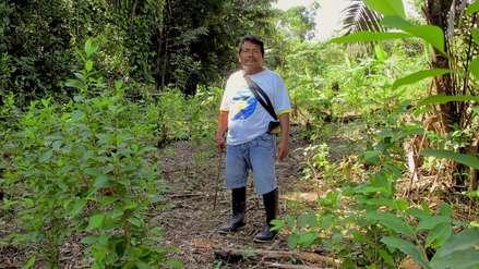 Loreto: indígenas tikuna defienden el bosque de las garras del narcotráfico