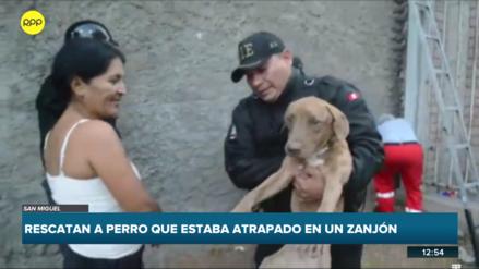 San Miguel | Bomberos y serenazgo rescataron a un perro atrapado en zanjón por más de tres horas