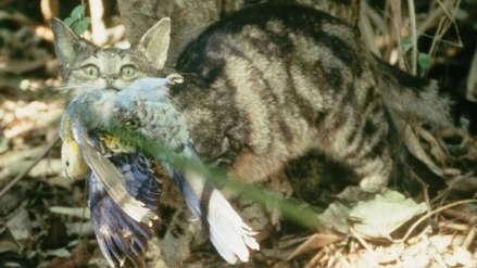 Exterminio felino: Australia quiere matar dos millones de gatos salvajes y animalistas se oponen
