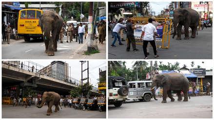 Un elefante escapó de su reserva y provocó atascos en las calles de una ciudad de India [VIDEO]