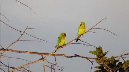 Global Big Day: Perú y Colombia se disputan tricampeonato de observación de aves