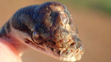 Autoridades descubrieron una extraña serpiente con tres ojos [FOTOS]