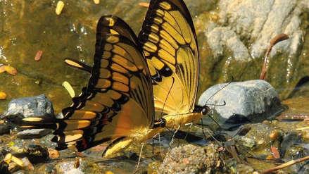 Un millón de especies están amenazadas de extinción por la acción humana