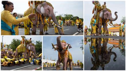 Así fue el desfile de elefantes en honor al nuevo rey de Tailandia [FOTOS]