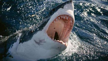 Hombre murió tras ser mordido por un tiburón mientras surfeaba cerca a isla francesa en el Índico