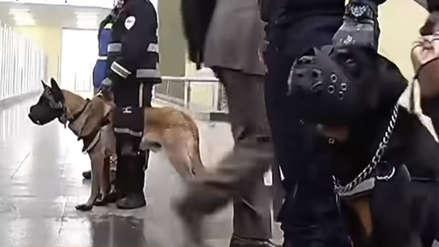 Polémica por el uso de perros para evitar que pasajeros ingresen sin pagar a los buses en Colombia