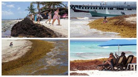 Así lucen las playas de Cancún tras el gigantesco incremento del sargazo en el Caribe [FOTOS]