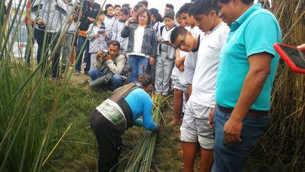 Promueven proyecto para preservar los tradicionales caballitos de totora en Huanchaco