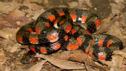 Especie de serpiente