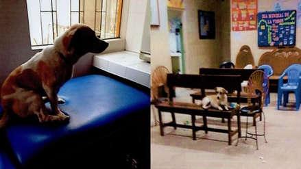 Perros se posan en camillas y ocupan espacios de pacientes en posta de Chimbote