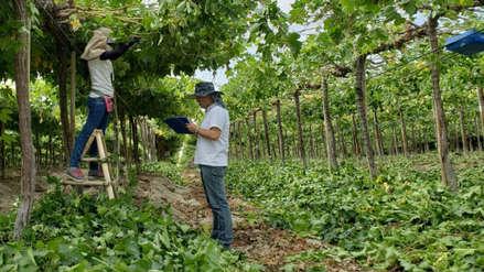Agroindustria y desarrollo sostenible