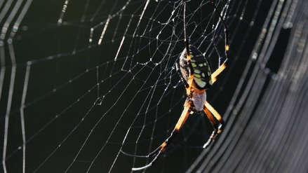 Fue al médico por un hormigueo y descubrieron una araña tejiendo su tela dentro de su oído [VIDEO]