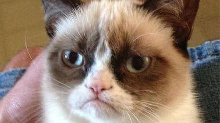 Grumpy Cat, la gata más famosa de Internet, murió a los siete años