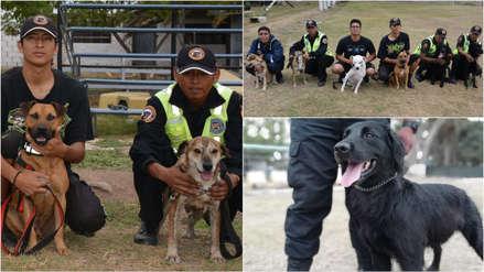 Nueve perros rescatados de la calle formarán parte de la Brigada Canina de Surco [FOTOS]